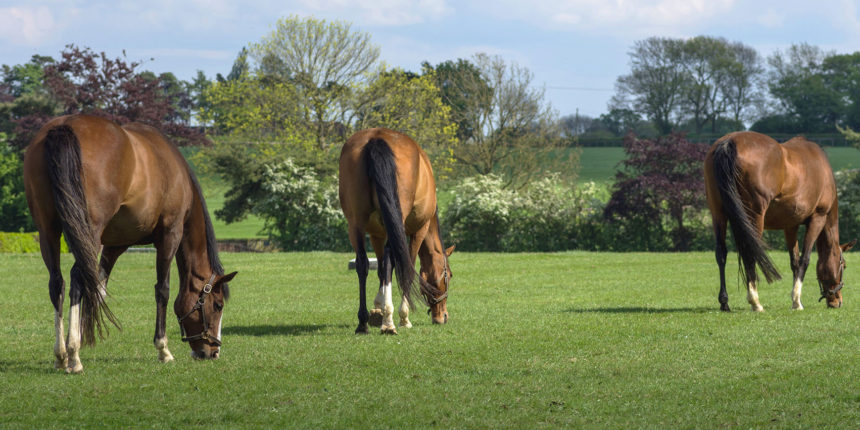 Rossdales Pregnant Mare and Stallion Course 2017
